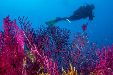 Sorrento immersione prova Corso Sub