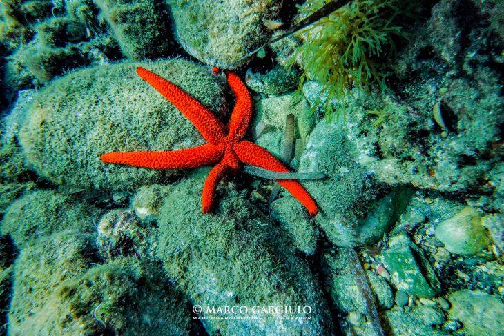 Snorkeling da Sorrento con Biologo marino incluso e giro in barca