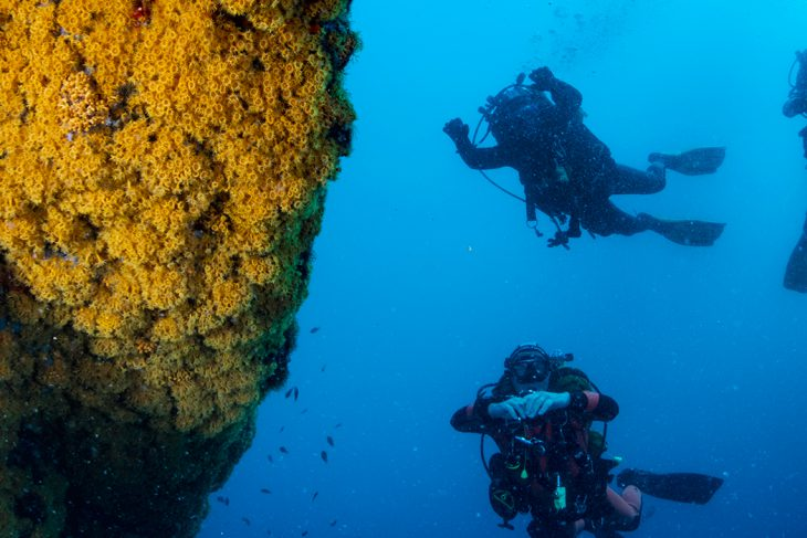 Boat tour and Diving Tour – from Sorrento (3-hour duration with single dive)